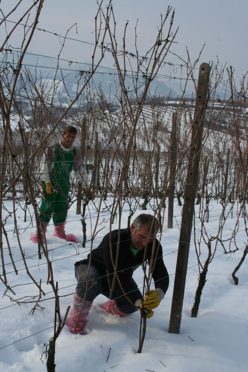 La neve in Vigna | Ctg Vini